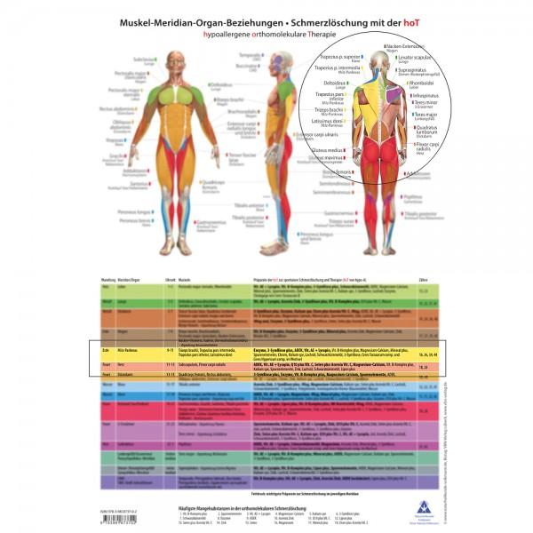 Arbeitsbogen Muskel-Meridian-Organ-Beziehungen
