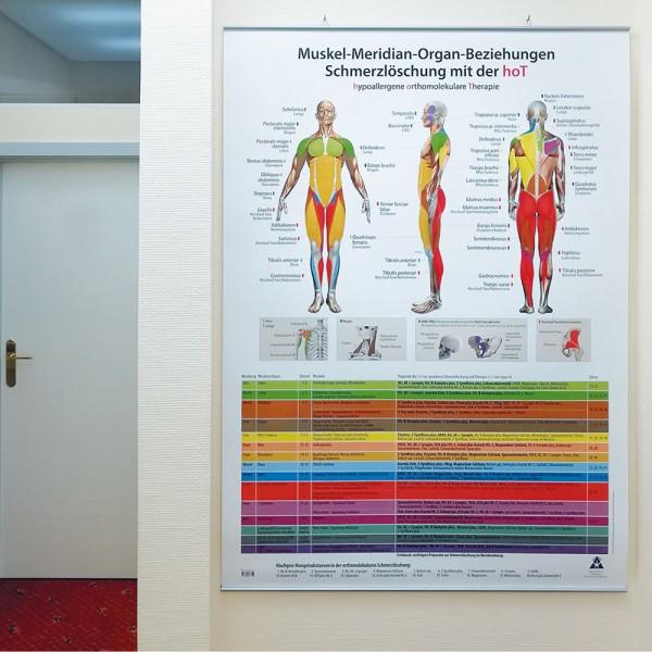 Plakat Schmerzlöschung –  Muskel-Meridian-Organ-Beziehungen